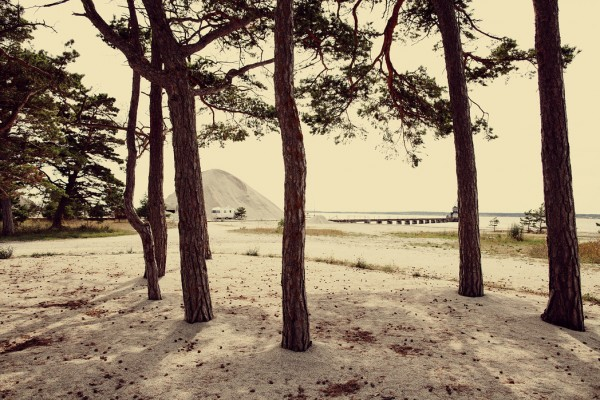 PHOTOWALL / Caravan and Pines in Gotland (e40521)