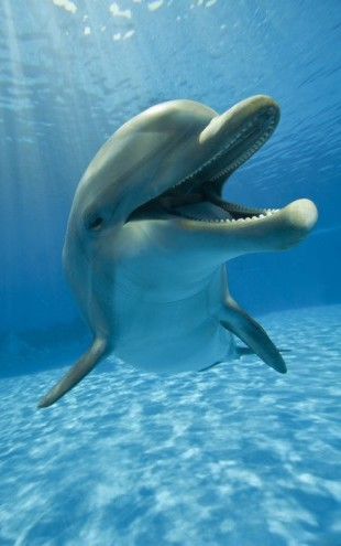 PHOTOWALL / Encounter with Dolphin (e40705)