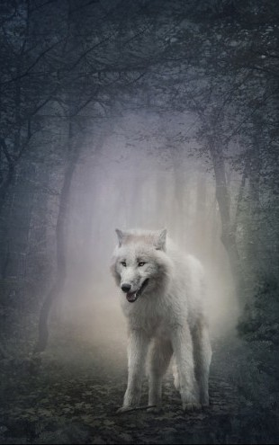 PHOTOWALL / White Wolf in the Night Forest (e40710)