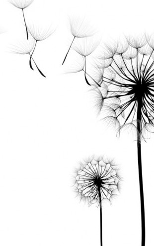 PHOTOWALL / Silhouette of Dandelions Seeds (e40699)