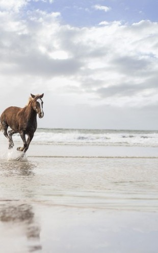 PHOTOWALL / Horses on South African Beach (e40984)