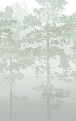 PHOTOWALL / Misty Pine Forest - Green (e30625)