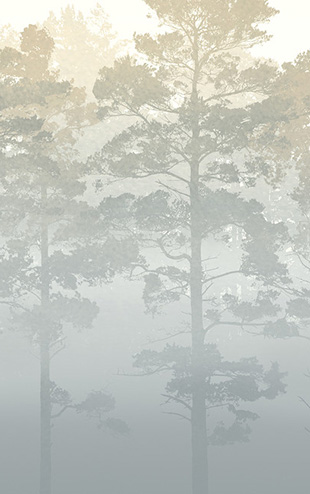 PHOTOWALL / Misty Pine Forest (e30626)