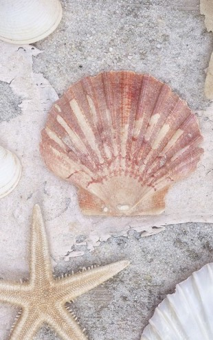 PHOTOWALL / Beach Treasures (e50207)