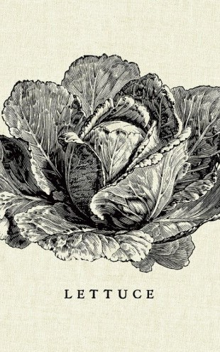 PHOTOWALL / Kitchen Illustration - Lettuce (e31006)