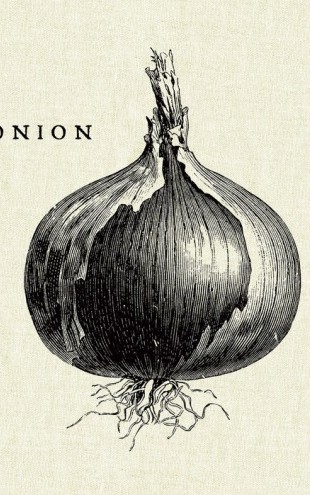 PHOTOWALL / Kitchen Illustration - Onion (e31007)
