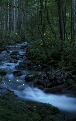 PHOTOWALL / Syncronous Fireflies, Great Smoky Mountains National Park (e31135)