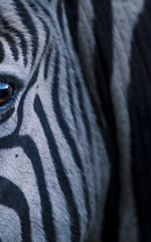 PHOTOWALL / Plains Zebra Close Up (e310385)