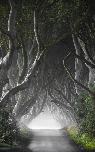 PHOTOWALL / Dark Hedges (e311028)