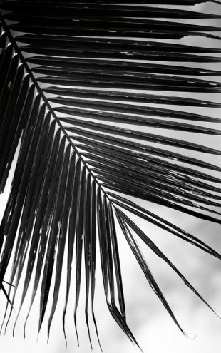PHOTOWALL / Palm Frond II (e311195)