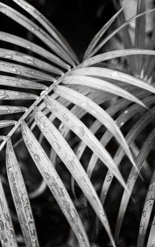 PHOTOWALL / Palm Fronds (e311196)