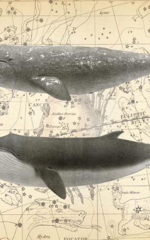PHOTOWALL / Whale Constellation (e311307)