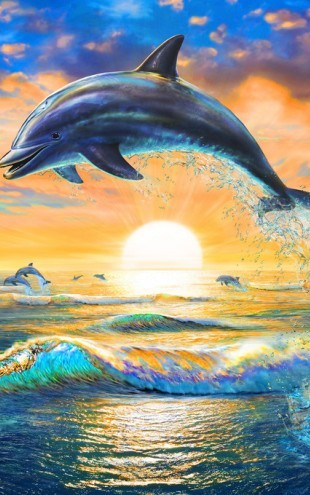 PHOTOWALL / Dolphin Sunrise (e312217)