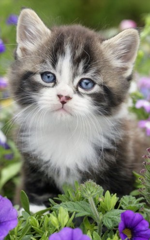 PHOTOWALL / Kitten in Flower Garden (e312541)