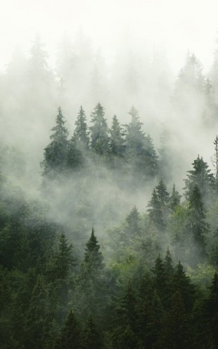 PHOTOWALL / Foggy Forest (e313674)