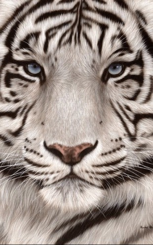 PHOTOWALL / White Tiger Face Portrait (e312740)
