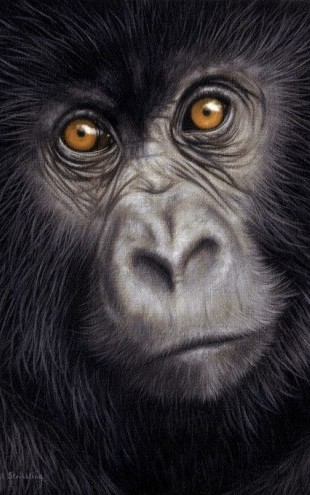 PHOTOWALL / Young Mountain Gorilla (e312745)