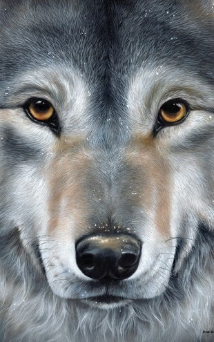 PHOTOWALL / Grey Wolf Face (e312772)