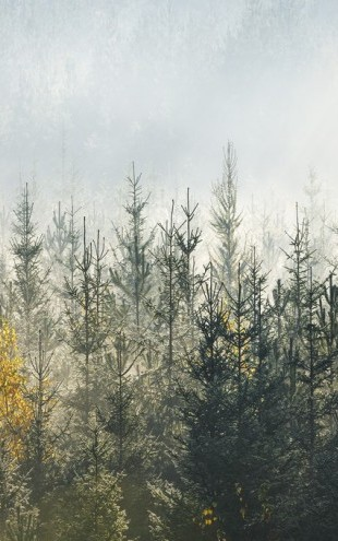 PHOTOWALL / Foggy Forest (e313024)