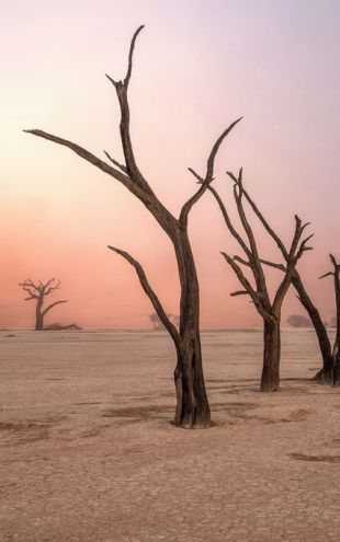 PHOTOWALL / Fog in Deadvlei (e315395)