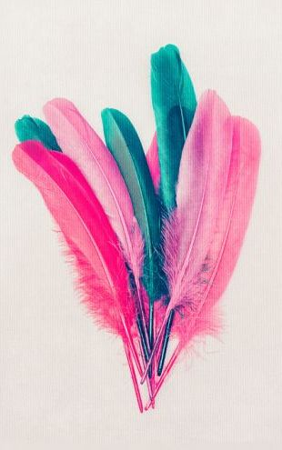 PHOTOWALL / Feather Bouquet (e315987)