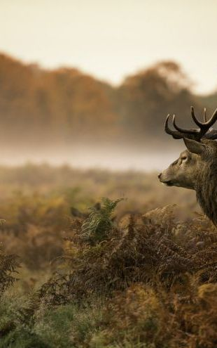 PHOTOWALL / Red Deer Stag (e316475)