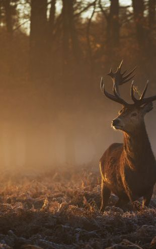 PHOTOWALL / Red Deer Stag (e318299)