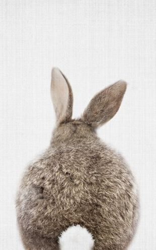 PHOTOWALL / Bunny Rabbit Tail (e322755)