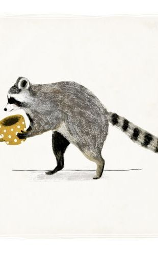 PHOTOWALL / Rascally Raccoon III (e324714)