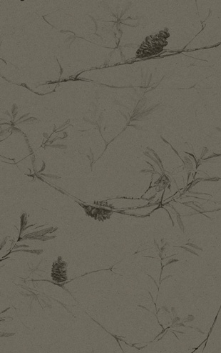 Quercus&Co. The Coastland II Collection Costal Banksia Davy's Grey